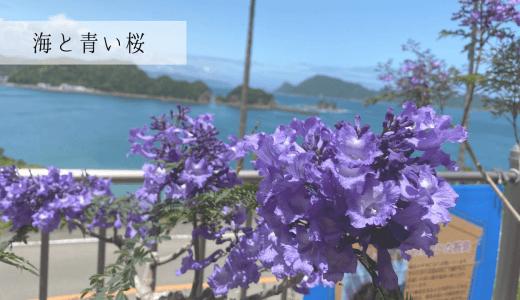 心を癒す素敵な景色。「道の駅なんごう」と「青い桜」