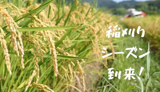 早期米稲刈りシーズン到来! やっぱり新米は美味しい!