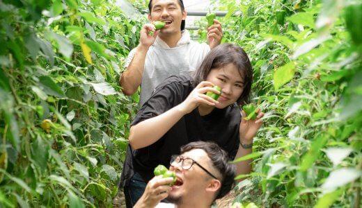 自慢のピーマンが食べ放題。「田村農園」でピーマン収穫祭を開きました!