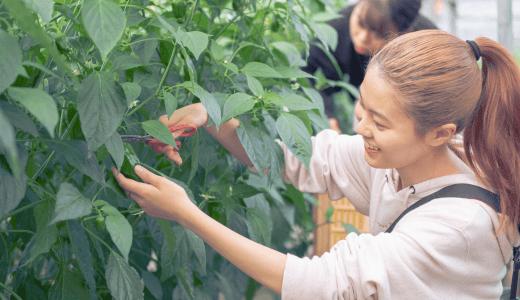 美味しさに驚愕、日南生まれの野菜たち。田村農園で1日農業体験をしてきました!