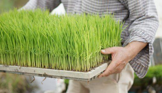 日本一早い新米作り。春の訪れを告げる「超早場米」の準備が、着々と進んでいます!